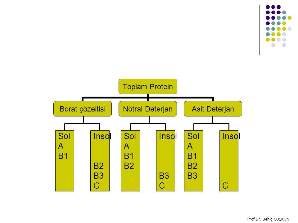 Toplam Protein Borat çözeltisi Nötral Deterjan Asit Deterjan Sol A B1 İnsol B2 B3 C Sol A B1 B2 İnsol B3 C Sol A B1 B2 B3 İnsol C Prof.Dr.