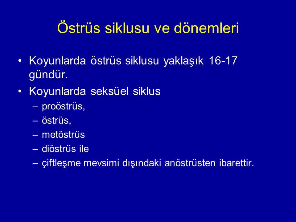 Östrüs siklusu ve dönemleri Koyunlarda östrüs siklusu yaklaşık 16-17 gündür.