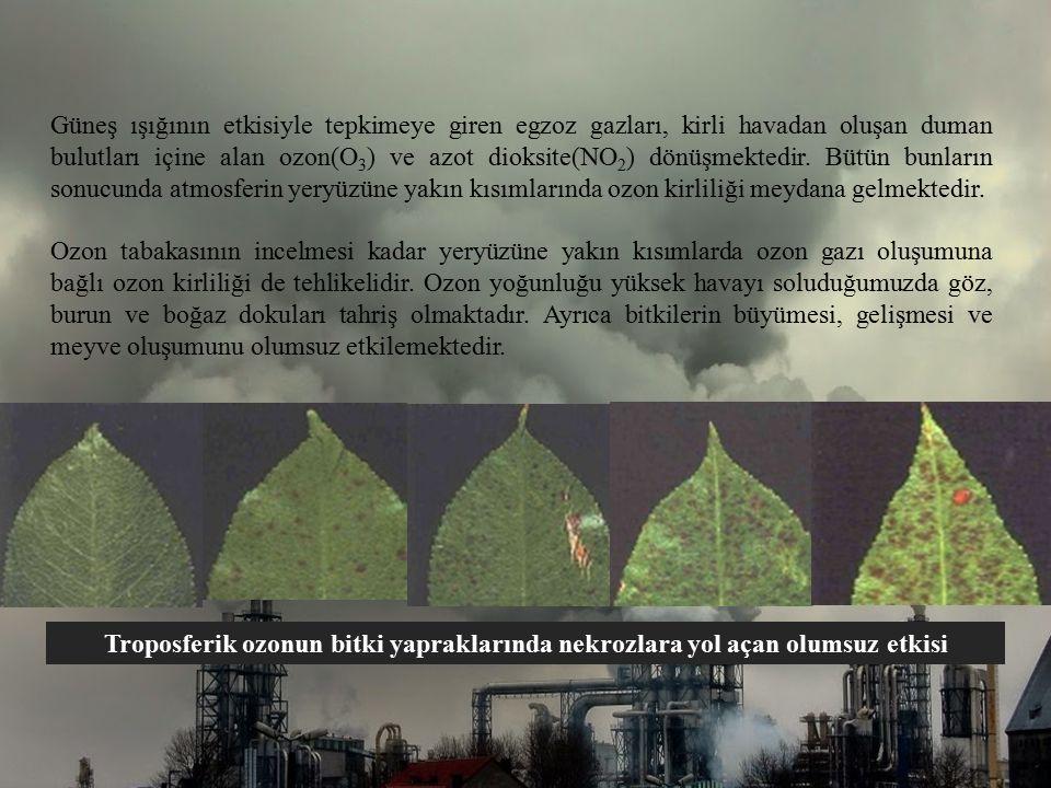 Güneş ışığının etkisiyle tepkimeye giren egzoz gazları, kirli havadan oluşan duman bulutları içine alan ozon(O 3 ) ve azot dioksite(NO 2 ) dönüşmekted