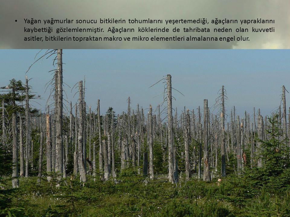 Yağan yağmurlar sonucu bitkilerin tohumlarını yeşertemediği, ağaçların yapraklarını kaybettiği gözlemlenmiştir. Ağaçların köklerinde de tahribata nede