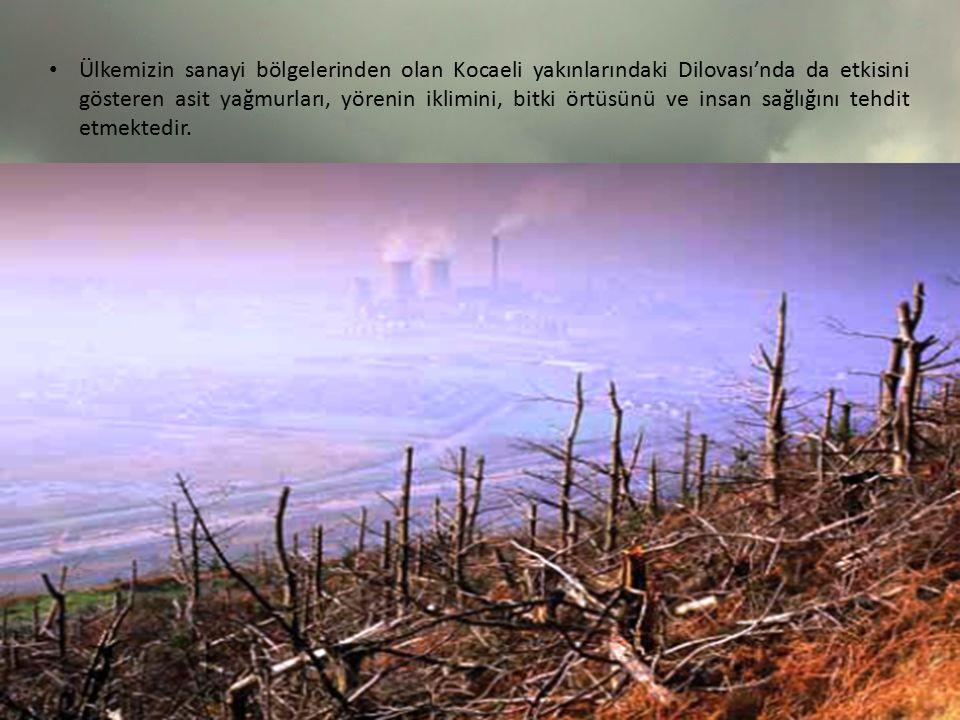 Ülkemizin sanayi bölgelerinden olan Kocaeli yakınlarındaki Dilovası'nda da etkisini gösteren asit yağmurları, yörenin iklimini, bitki örtüsünü ve insa