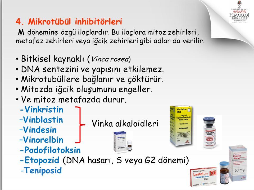 4. Mikrotübül inhibitörleri M dönemine özgü ilaçlardır. Bu ilaçlara mitoz zehirleri, metafaz zehirleri veya iğcik zehirleri gibi adlar da verilir. Bit