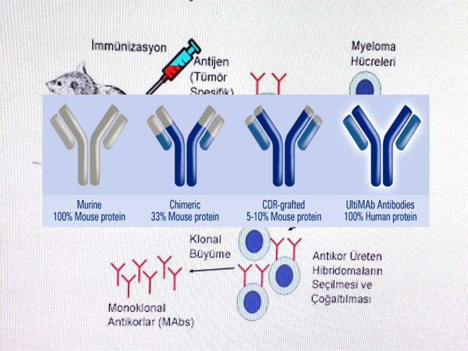 1.Grup taşımayan monoklonal antikorlar (unconjugated) Komplemana bağımlı sitotoksisite ve antikora bağımlı hücresel sitotoksisiteyi aktive ederek direk tümör hücresinin ölümüne yol açarlar.