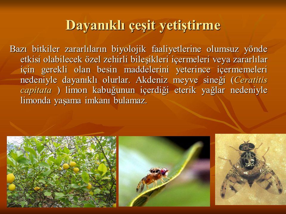 Dayanıklı çeşit yetiştirme Bazı bitkiler zararlıların biyolojik faaliyetlerine olumsuz yönde etkisi olabilecek özel zehirli bileşikleri içermeleri vey