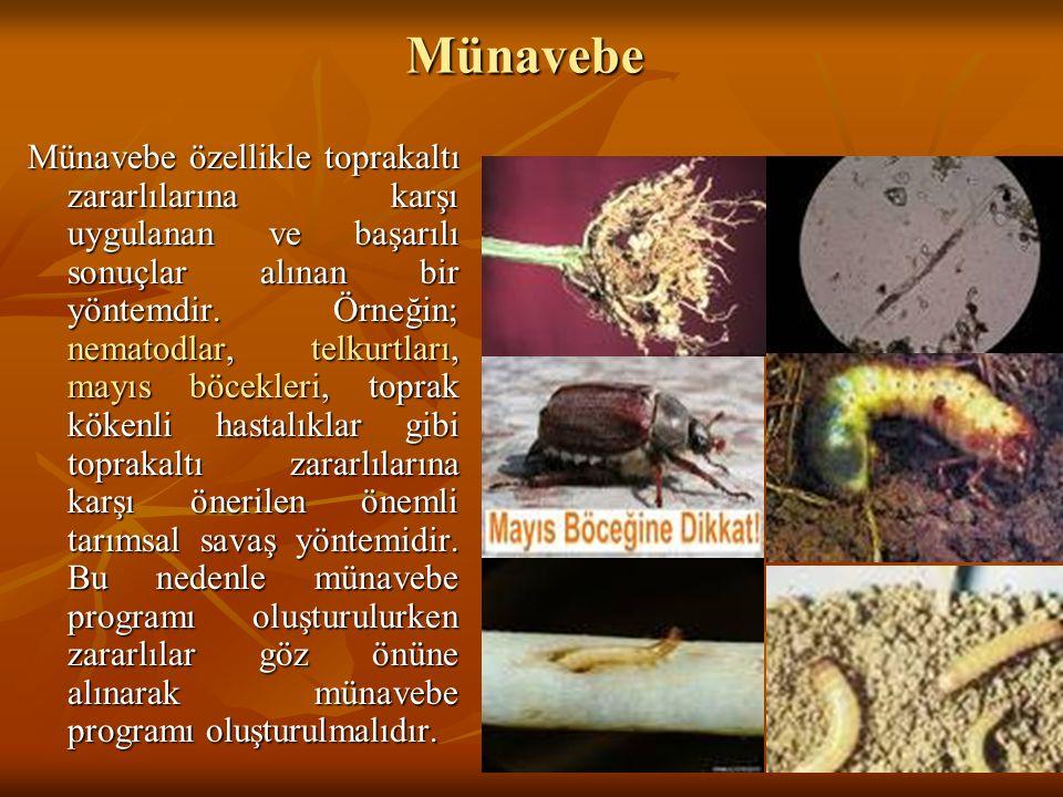Münavebe Münavebe özellikle toprakaltı zararlılarına karşı uygulanan ve başarılı sonuçlar alınan bir yöntemdir. Örneğin; nematodlar, telkurtları, mayı