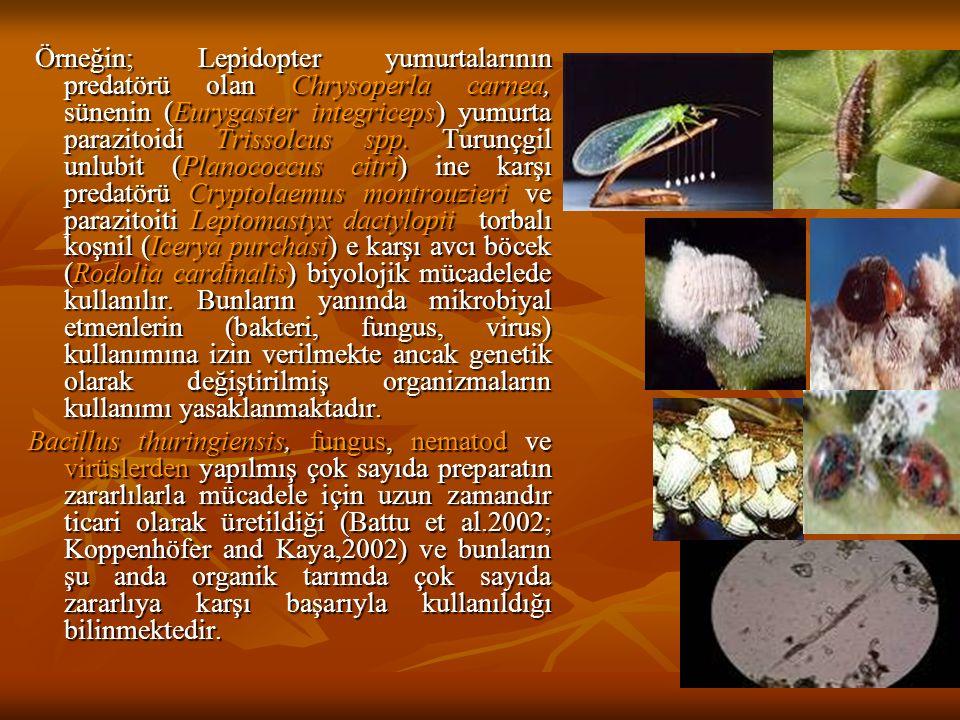 Örneğin; Lepidopter yumurtalarının predatörü olan Chrysoperla carnea, sünenin (Eurygaster integriceps) yumurta parazitoidi Trissolcus spp. Turunçgil u