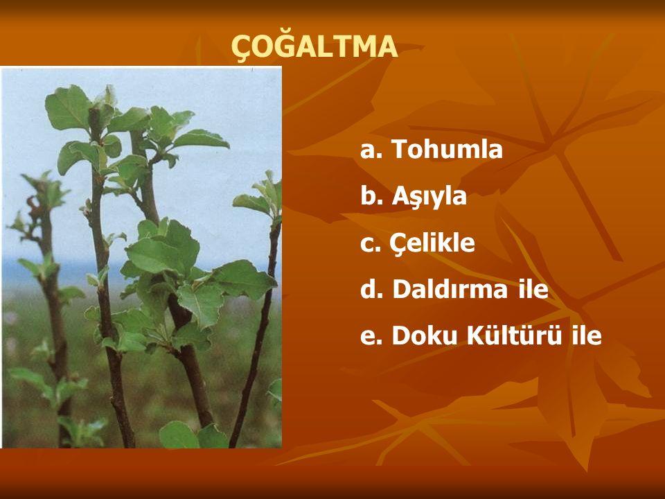 ÇOĞALTMA a. Tohumla b. Aşıyla c. Çelikle d. Daldırma ile e. Doku Kültürü ile