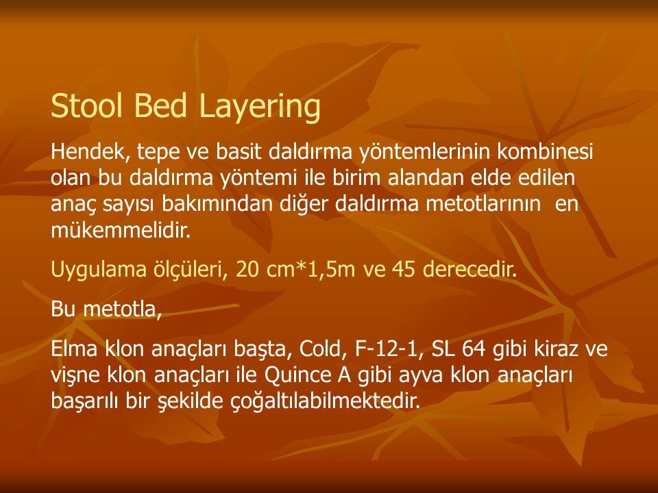 Stool Bed Layering Hendek, tepe ve basit daldırma yöntemlerinin kombinesi olan bu daldırma yöntemi ile birim alandan elde edilen anaç sayısı bakımından diğer daldırma metotlarının en mükemmelidir.