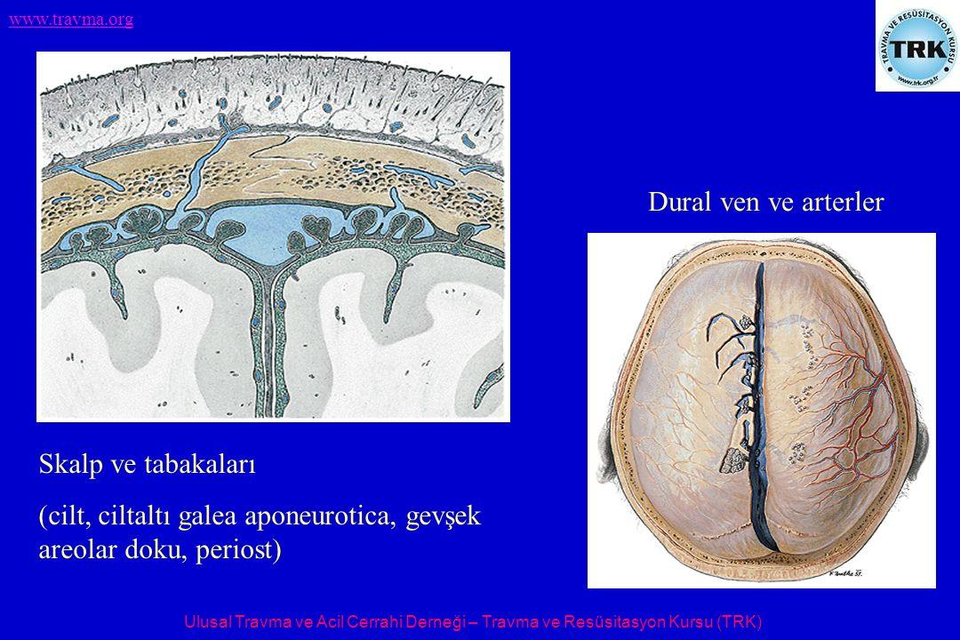 Ulusal Travma ve Acil Cerrahi Derneği – Travma ve Resüsitasyon Kursu (TRK) www.travma.org Skalp ve tabakaları (cilt, ciltaltı galea aponeurotica, gevş
