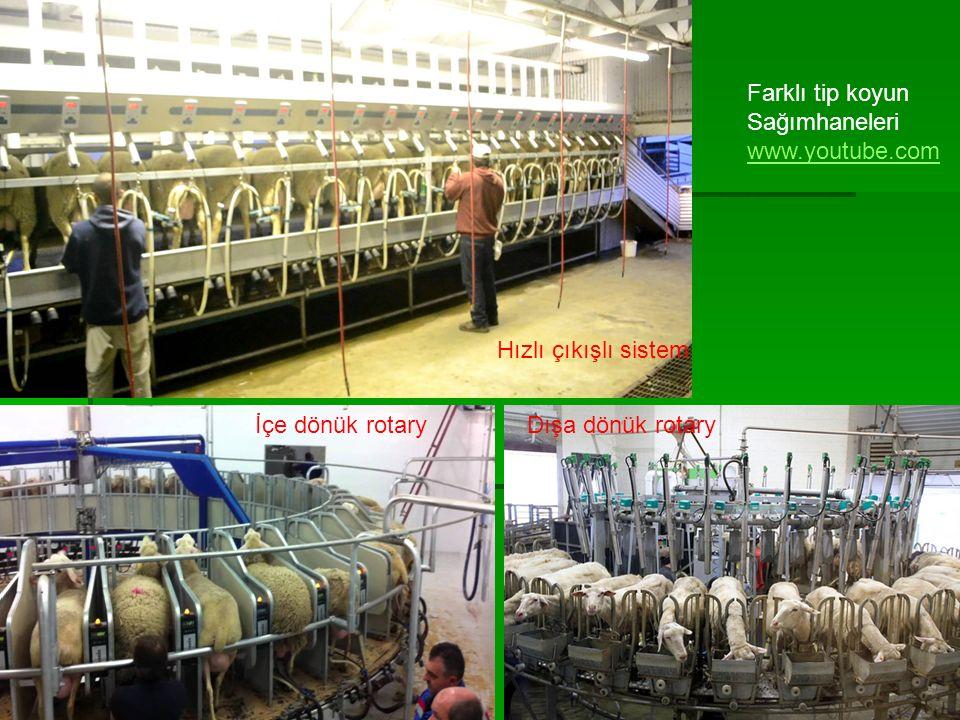 13 Farklı tip koyun Sağımhaneleri www.youtube.com Hızlı çıkışlı sistem Dışa dönük rotaryİçe dönük rotary