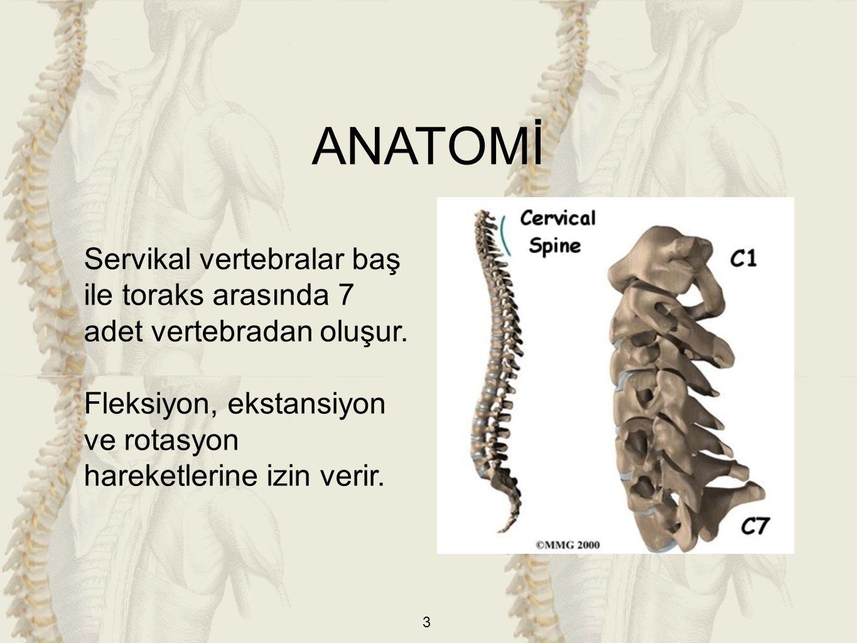 3 Servikal vertebralar baş ile toraks arasında 7 adet vertebradan oluşur. Fleksiyon, ekstansiyon ve rotasyon hareketlerine izin verir. ANATOMİ