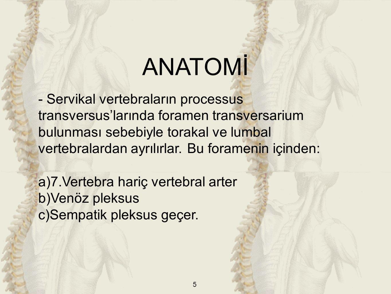 5 - Servikal vertebraların processus transversus'larında foramen transversarium bulunması sebebiyle torakal ve lumbal vertebralardan ayrılırlar.