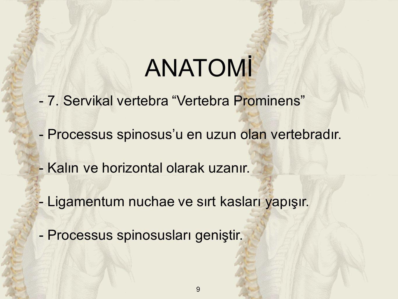 """9 - 7. Servikal vertebra """"Vertebra Prominens"""" - Processus spinosus'u en uzun olan vertebradır. - Kalın ve horizontal olarak uzanır. - Ligamentum nucha"""
