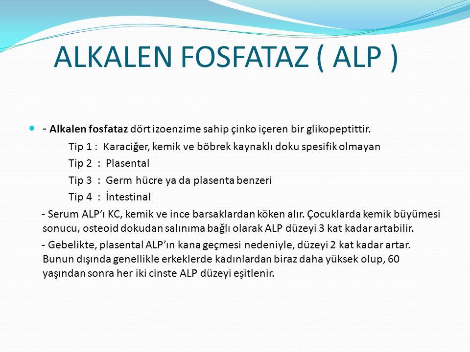 ALKALEN FOSFATAZ ( ALP ) - Alkalen fosfataz dört izoenzime sahip çinko içeren bir glikopeptittir.