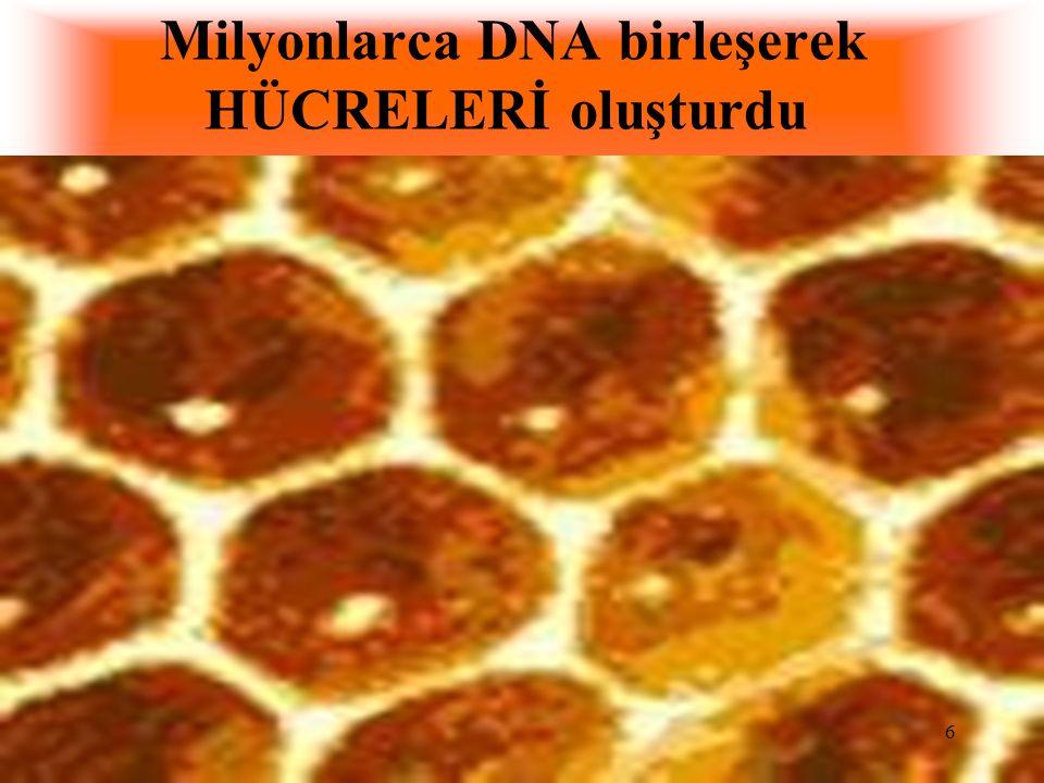 Milyonlarca DNA birleşerek HÜCRELERİ oluşturdu 6