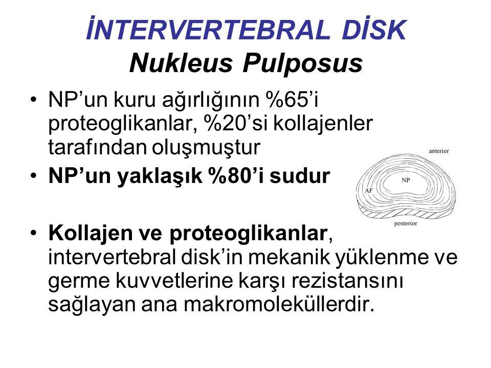 İNTERVERTEBRAL DİSK Nukleus Pulposus NP'un kuru ağırlığının %65'i proteoglikanlar, %20'si kollajenler tarafından oluşmuştur NP'un yaklaşık %80'i sudur Kollajen ve proteoglikanlar, intervertebral disk'in mekanik yüklenme ve germe kuvvetlerine karşı rezistansını sağlayan ana makromoleküllerdir.