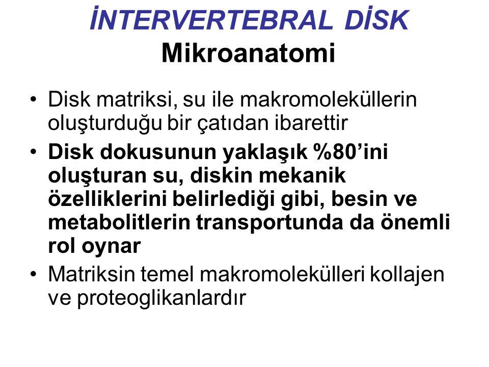 İNTERVERTEBRAL DİSK Mikroanatomi Disk matriksi, su ile makromoleküllerin oluşturduğu bir çatıdan ibarettir Disk dokusunun yaklaşık %80'ini oluşturan su, diskin mekanik özelliklerini belirlediği gibi, besin ve metabolitlerin transportunda da önemli rol oynar Matriksin temel makromolekülleri kollajen ve proteoglikanlardır