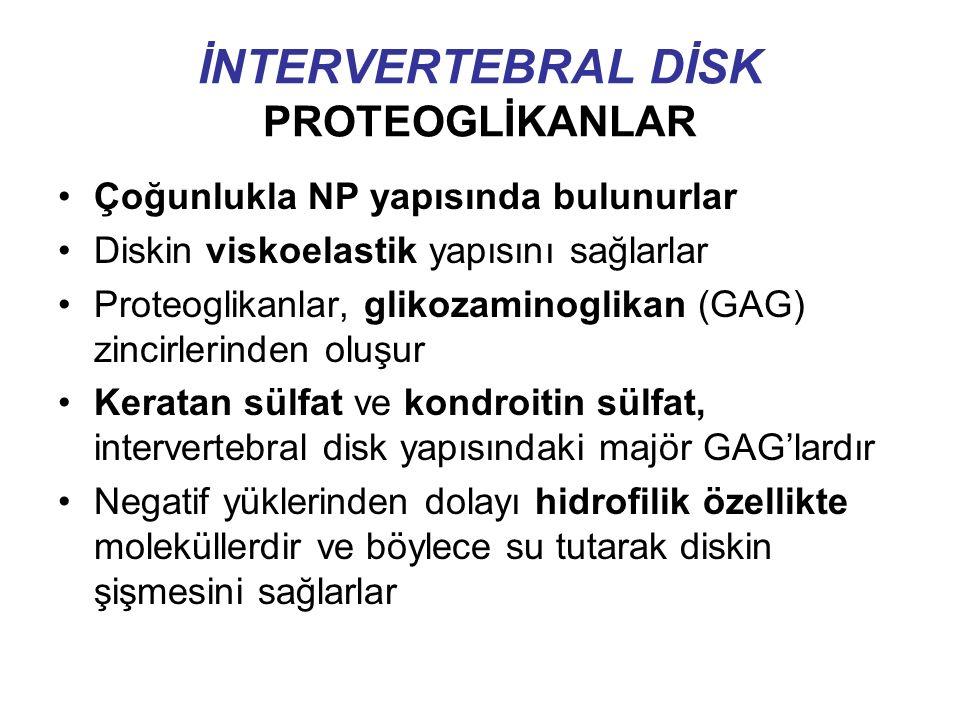 İNTERVERTEBRAL DİSK PROTEOGLİKANLAR Çoğunlukla NP yapısında bulunurlar Diskin viskoelastik yapısını sağlarlar Proteoglikanlar, glikozaminoglikan (GAG) zincirlerinden oluşur Keratan sülfat ve kondroitin sülfat, intervertebral disk yapısındaki majör GAG'lardır Negatif yüklerinden dolayı hidrofilik özellikte moleküllerdir ve böylece su tutarak diskin şişmesini sağlarlar
