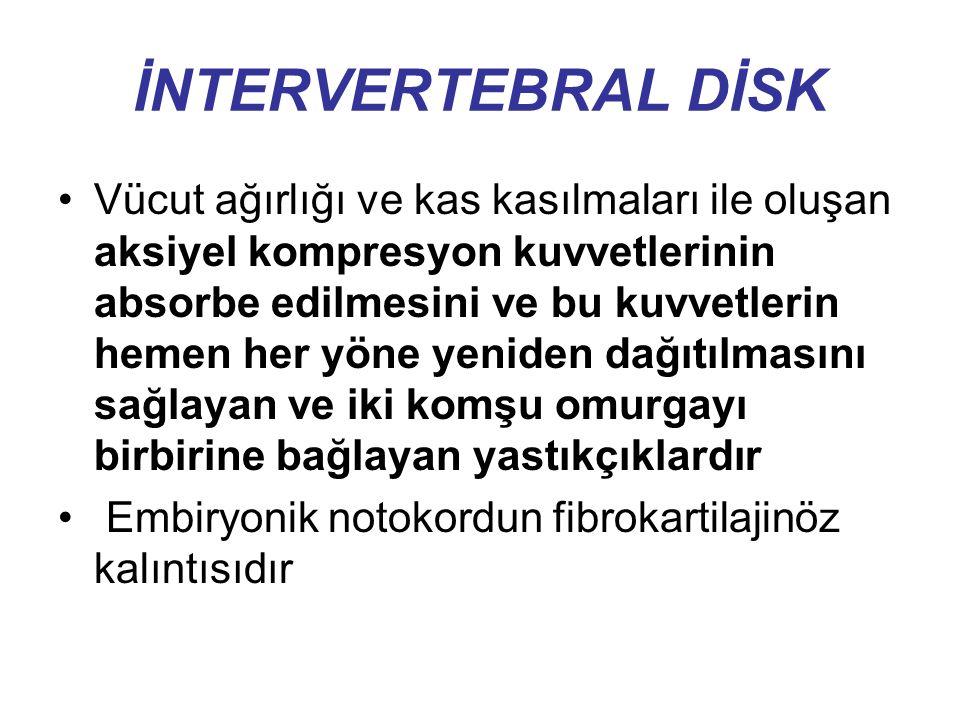 İNTERVERTEBRAL DİSK Hücreler İntervertebral diskin az sayıda hücresi olmasına rağmen bu hücrelerin hayati görevleri vardır Kondrositler diskin proteoglikan, kollajen ve diğer moleküllerini sağlayarak içinde yer aldıkları matriksi sentez ederler Matriks sentezi ve yıkımı dengede olduğu sürece disk sağlıklı bir şekilde yaşamını sürdürür.