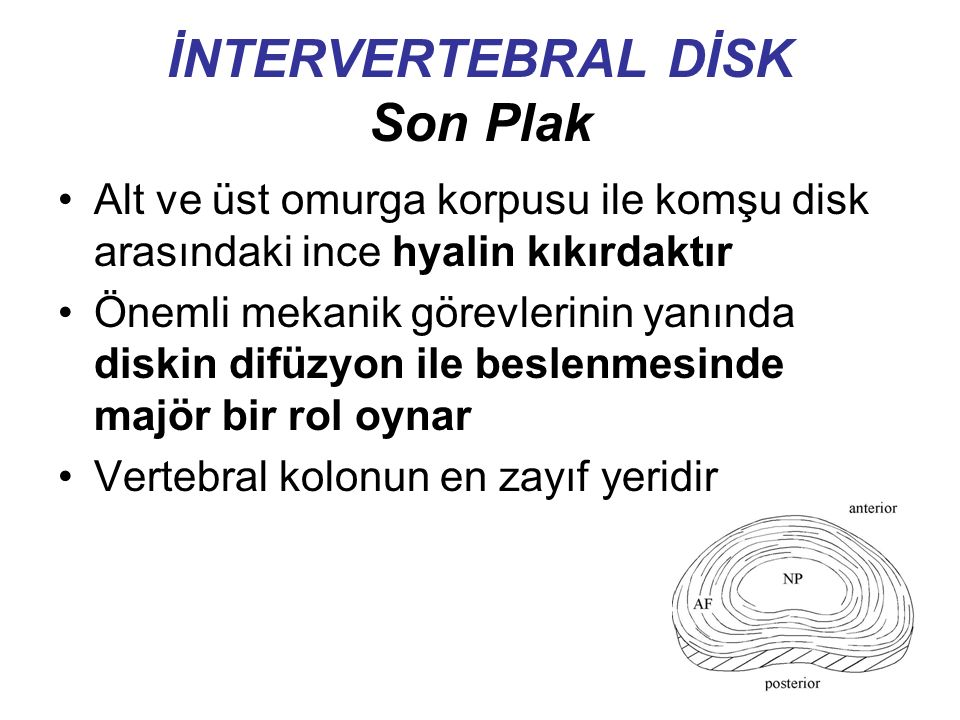 İNTERVERTEBRAL DİSK Son Plak Alt ve üst omurga korpusu ile komşu disk arasındaki ince hyalin kıkırdaktır Önemli mekanik görevlerinin yanında diskin difüzyon ile beslenmesinde majör bir rol oynar Vertebral kolonun en zayıf yeridir