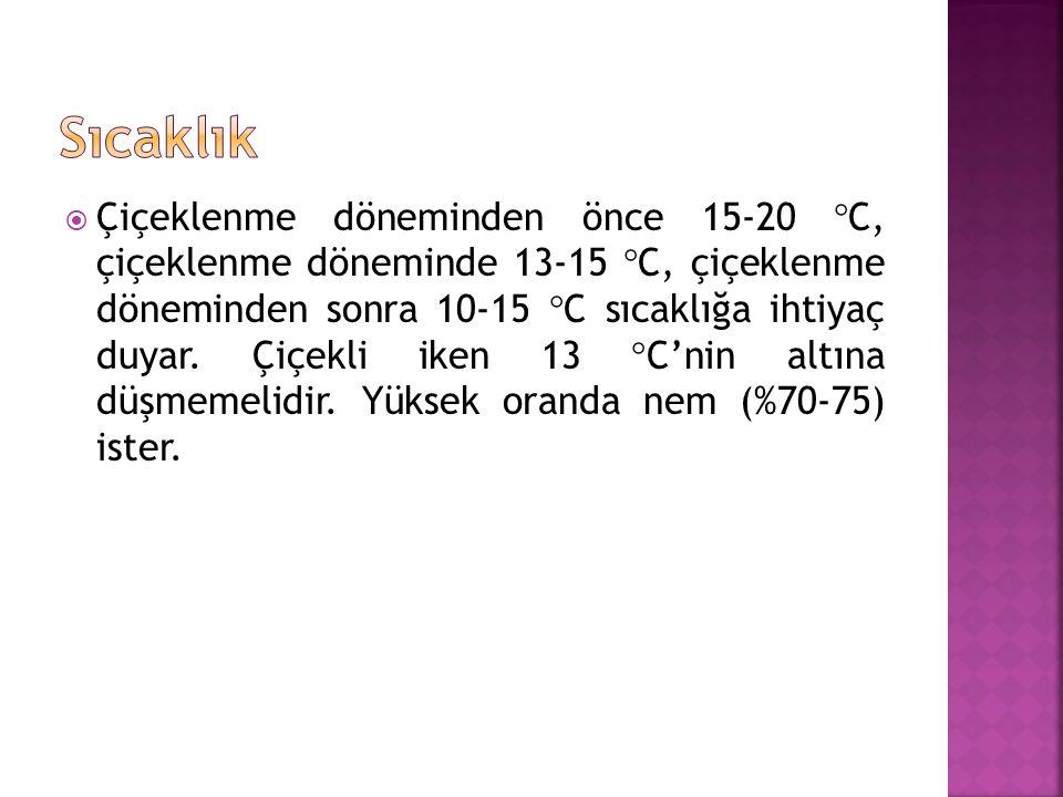  Çiçeklenme döneminden önce 15-20  C, çiçeklenme döneminde 13-15  C, çiçeklenme döneminden sonra 10-15  C sıcaklığa ihtiyaç duyar.