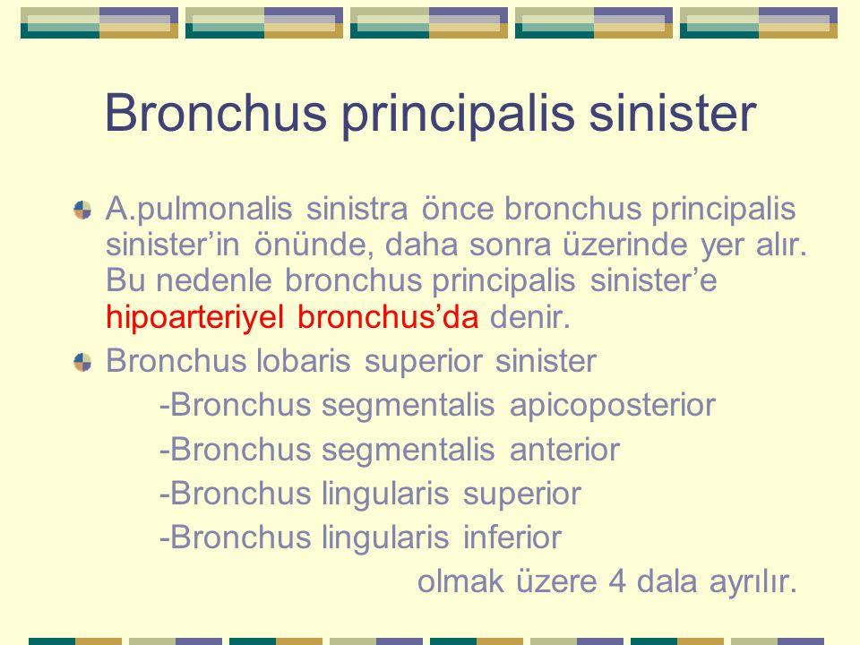 Bronchus principalis sinister A.pulmonalis sinistra önce bronchus principalis sinister'in önünde, daha sonra üzerinde yer alır. Bu nedenle bronchus pr
