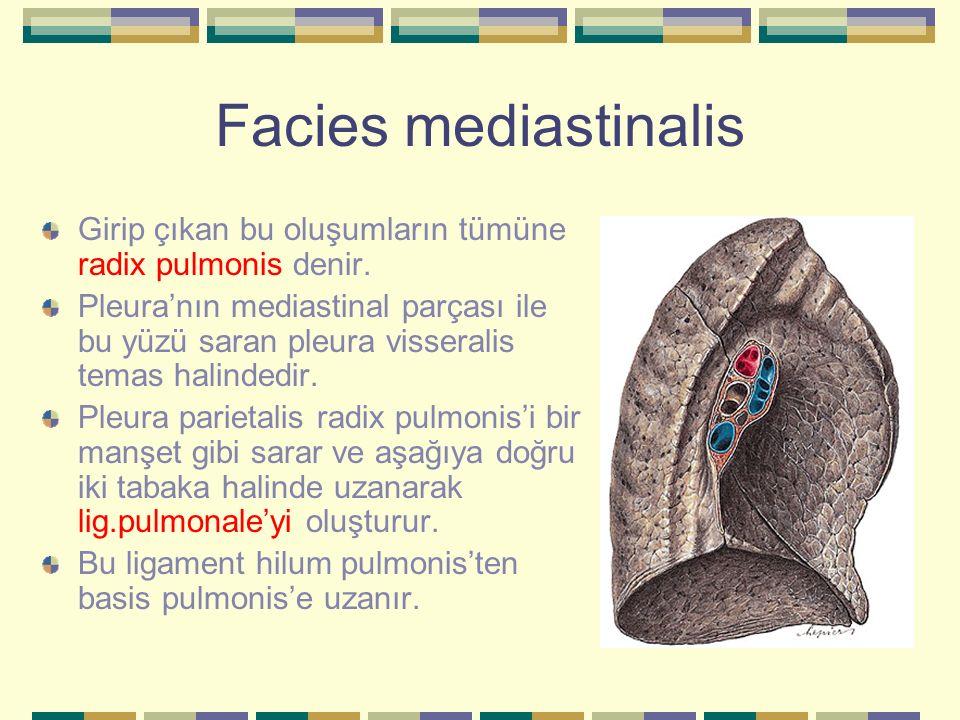 Facies mediastinalis Girip çıkan bu oluşumların tümüne radix pulmonis denir. Pleura'nın mediastinal parçası ile bu yüzü saran pleura visseralis temas