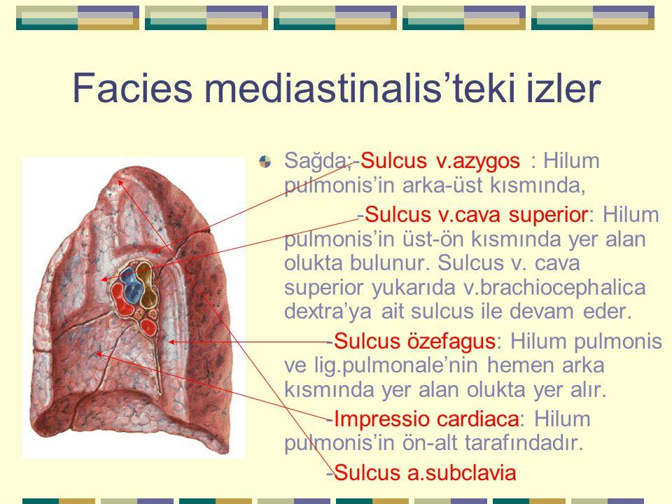 Facies mediastinalis'teki izler Sağda;-Sulcus v.azygos : Hilum pulmonis'in arka-üst kısmında, -Sulcus v.cava superior: Hilum pulmonis'in üst-ön kısmın