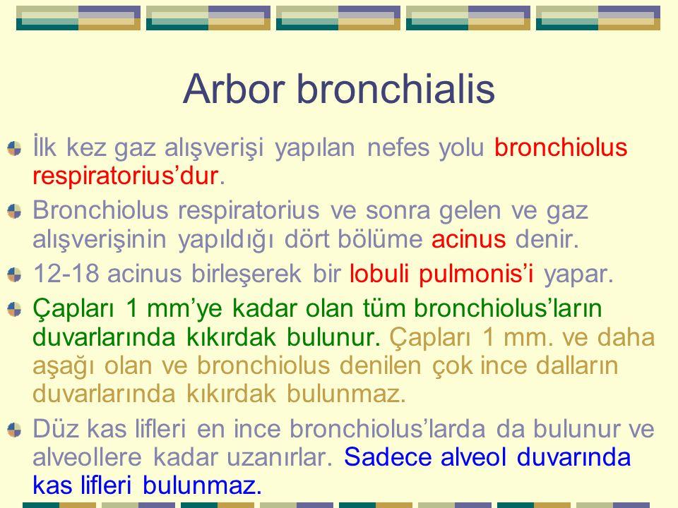 Arbor bronchialis İlk kez gaz alışverişi yapılan nefes yolu bronchiolus respiratorius'dur. Bronchiolus respiratorius ve sonra gelen ve gaz alışverişin