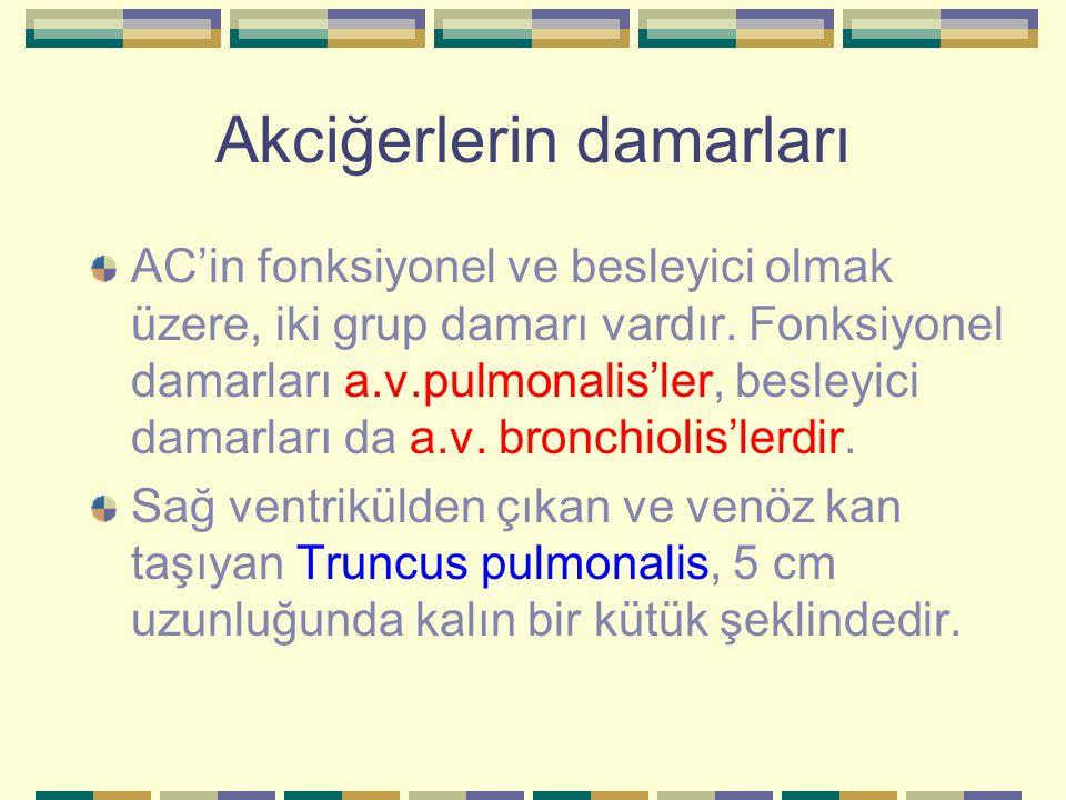 Akciğerlerin damarları AC'in fonksiyonel ve besleyici olmak üzere, iki grup damarı vardır. Fonksiyonel damarları a.v.pulmonalis'ler, besleyici damarla