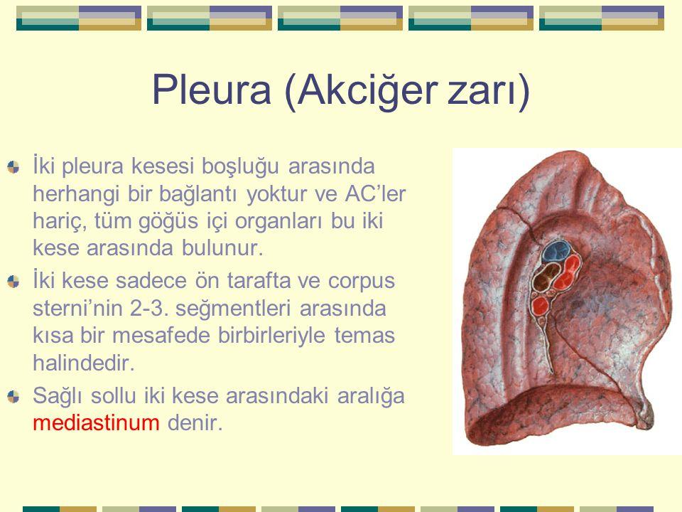 Pleura (Akciğer zarı) İki pleura kesesi boşluğu arasında herhangi bir bağlantı yoktur ve AC'ler hariç, tüm göğüs içi organları bu iki kese arasında bu