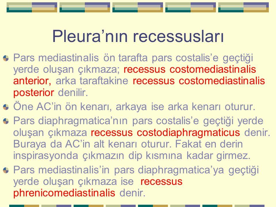 Pleura'nın recessusları Pars mediastinalis ön tarafta pars costalis'e geçtiği yerde oluşan çıkmaza; recessus costomediastinalis anterior, arka tarafta