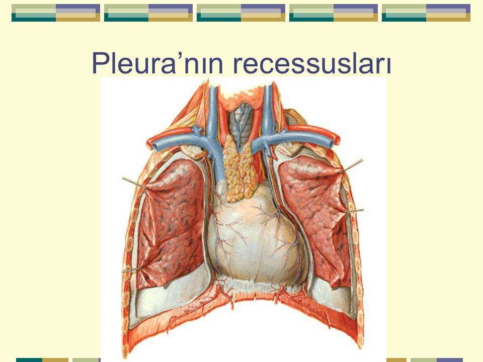 Pleura'nın recessusları