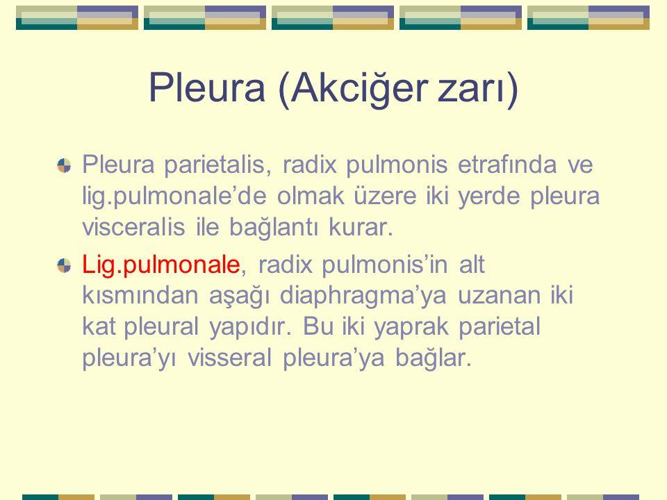 Pleura (Akciğer zarı) Pleura parietalis, radix pulmonis etrafında ve lig.pulmonale'de olmak üzere iki yerde pleura visceralis ile bağlantı kurar. Lig.