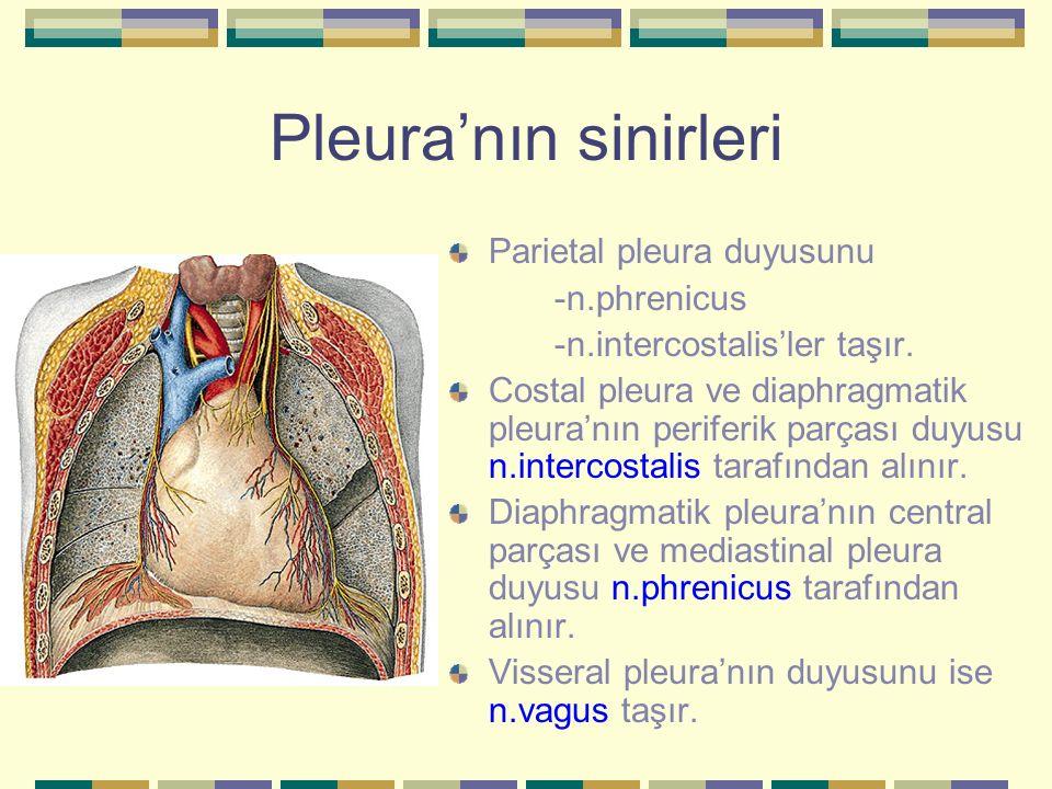Pleura'nın sinirleri Parietal pleura duyusunu -n.phrenicus -n.intercostalis'ler taşır. Costal pleura ve diaphragmatik pleura'nın periferik parçası duy
