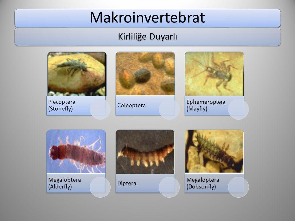 Makroinvertebrat Kirliliğe Duyarlı Plecoptera (Stonefly) Coleoptera Ephemeroptera (Mayfly) Megaloptera (Alderfly) Diptera Megaloptera (Dobsonfly)