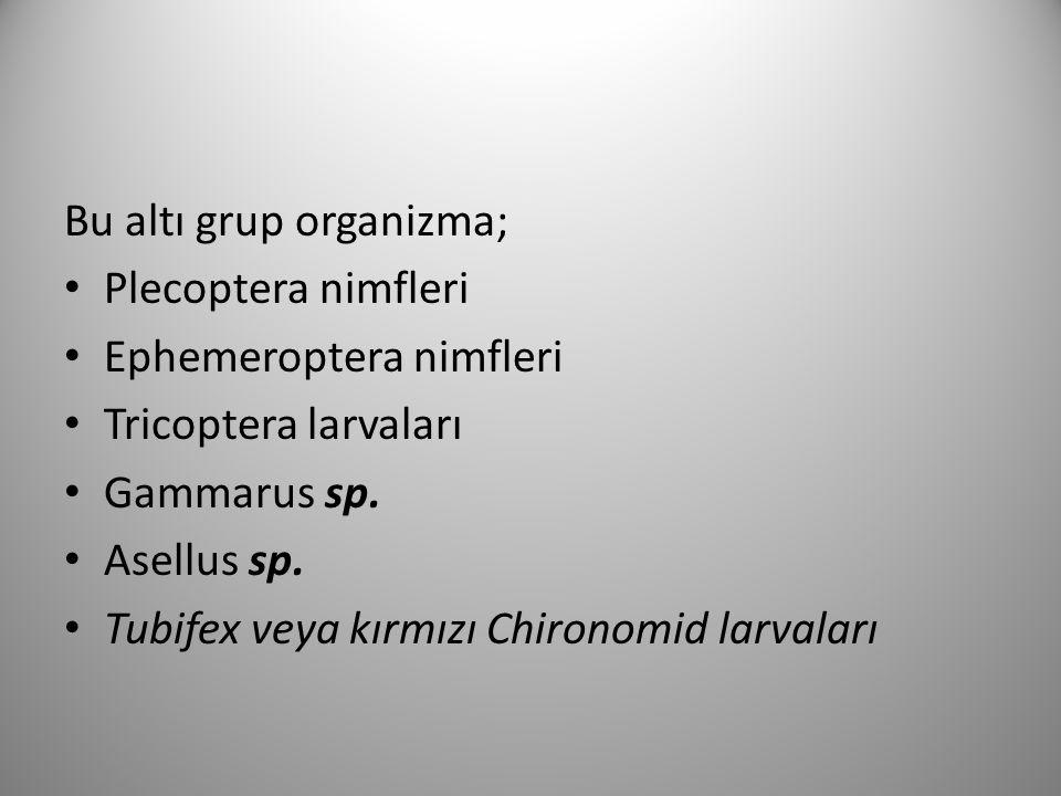 Bu altı grup organizma; Plecoptera nimfleri Ephemeroptera nimfleri Tricoptera larvaları Gammarus sp.