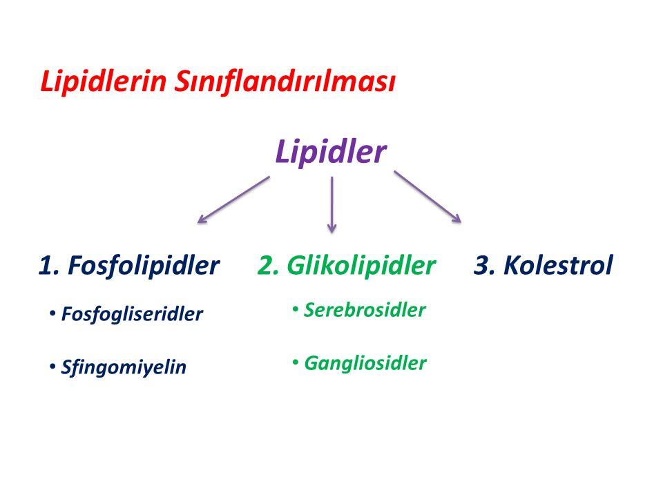 Lipidler 1.Fosfolipidler 2. Glikolipidler 3.