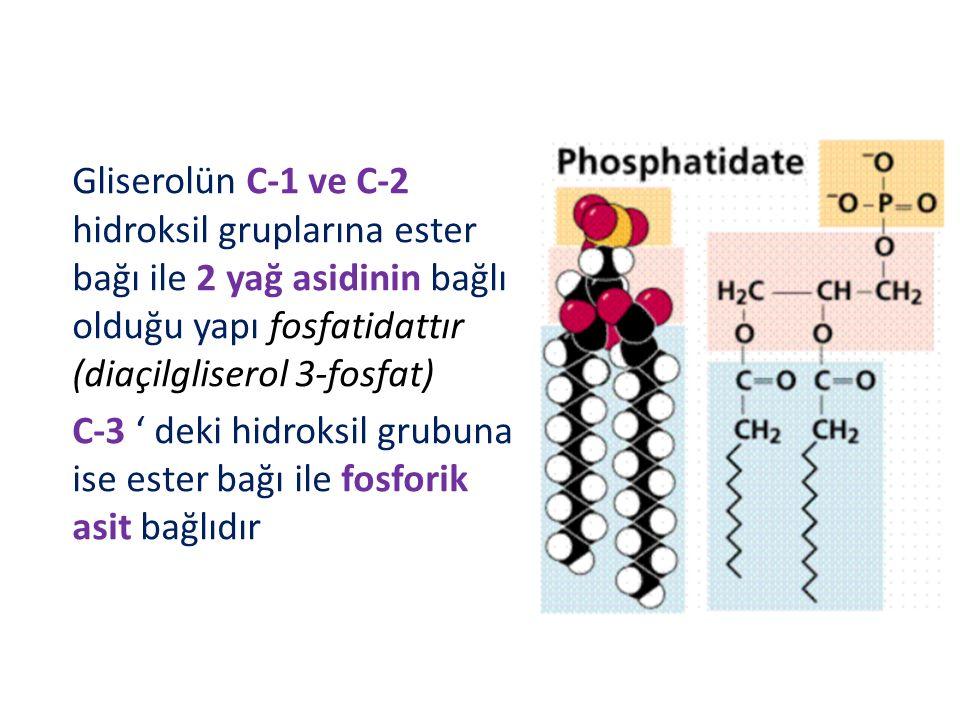 Gliserolün C-1 ve C-2 hidroksil gruplarına ester bağı ile 2 yağ asidinin bağlı olduğu yapı fosfatidattır (diaçilgliserol 3-fosfat) C-3 ' deki hidroksil grubuna ise ester bağı ile fosforik asit bağlıdır