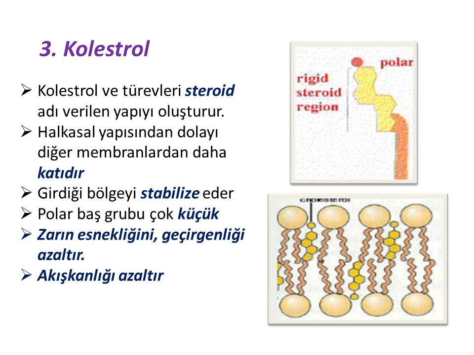 3.Kolestrol  Kolestrol ve türevleri steroid adı verilen yapıyı oluşturur.