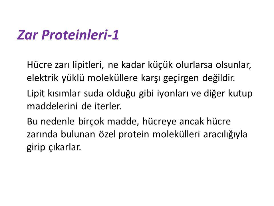 Zar Proteinleri-1 Hücre zarı lipitleri, ne kadar küçük olurlarsa olsunlar, elektrik yüklü moleküllere karşı geçirgen değildir.
