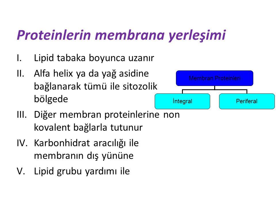 Membran Proteinleri İntegralPeriferal Proteinlerin membrana yerleşimi I.Lipid tabaka boyunca uzanır II.Alfa helix ya da yağ asidine bağlanarak tümü ile sitozolik bölgede III.Diğer membran proteinlerine non kovalent bağlarla tutunur IV.Karbonhidrat aracılığı ile membranın dış yününe V.Lipid grubu yardımı ile