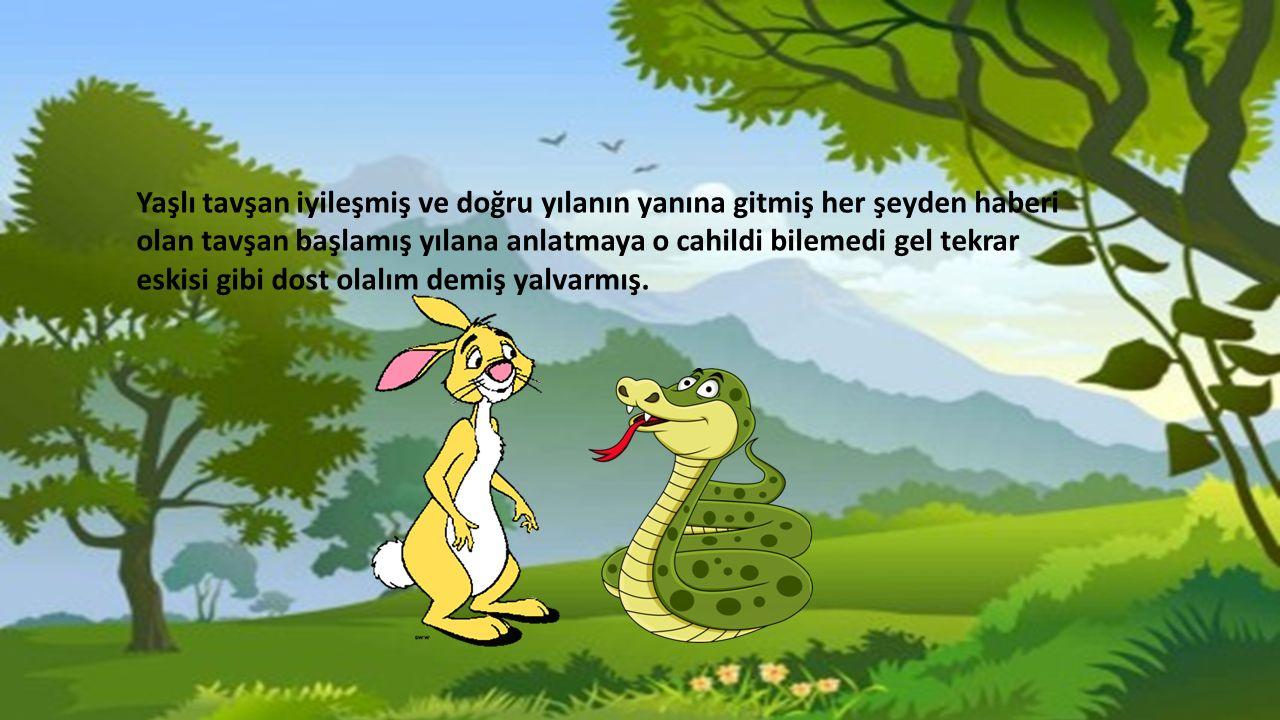 Yaşlı tavşan iyileşmiş ve doğru yılanın yanına gitmiş her şeyden haberi olan tavşan başlamış yılana anlatmaya o cahildi bilemedi gel tekrar eskisi gibi dost olalım demiş yalvarmış.