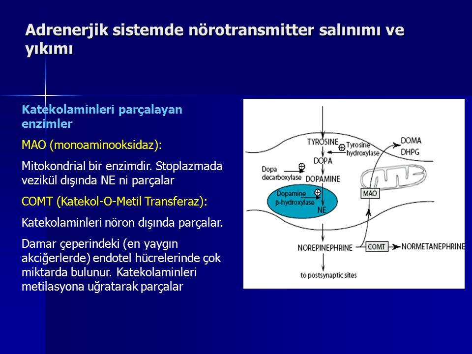 Adrenerjik sistemde nörotransmitter salınımı ve yıkımı Katekolaminleri parçalayan enzimler MAO (monoaminooksidaz): Mitokondrial bir enzimdir. Stoplazm