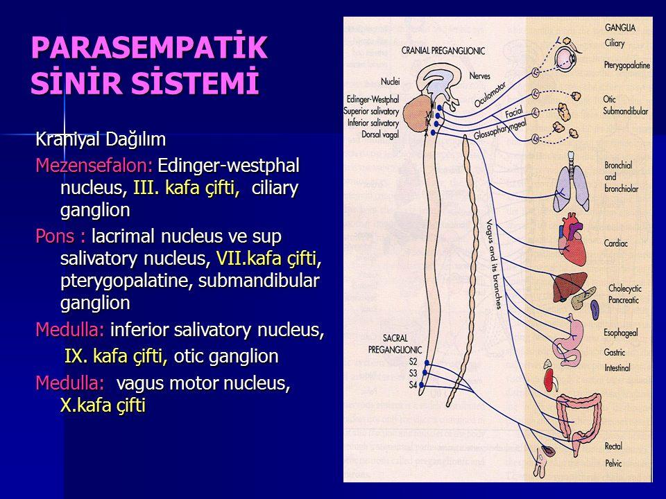 PARASEMPATİK SİNİR SİSTEMİ Kraniyal Dağılım Mezensefalon: Edinger-westphal nucleus, III. kafa çifti, ciliary ganglion Pons : lacrimal nucleus ve sup s