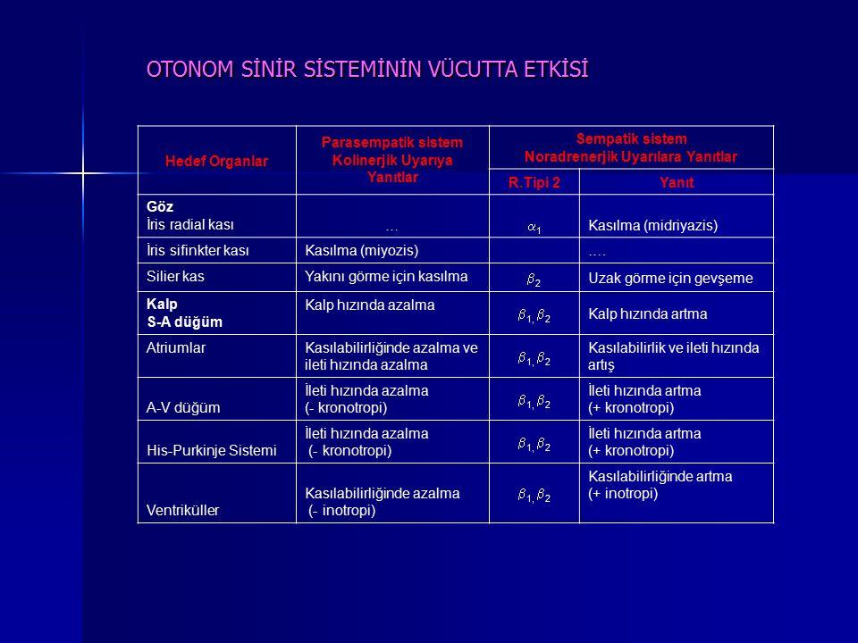 Hedef Organlar Parasempatik sistem Kolinerjik Uyarıya Yanıtlar Sempatik sistem Noradrenerjik Uyarılara Yanıtlar R.Tipi 2Yanıt Göz İris radial kası … 