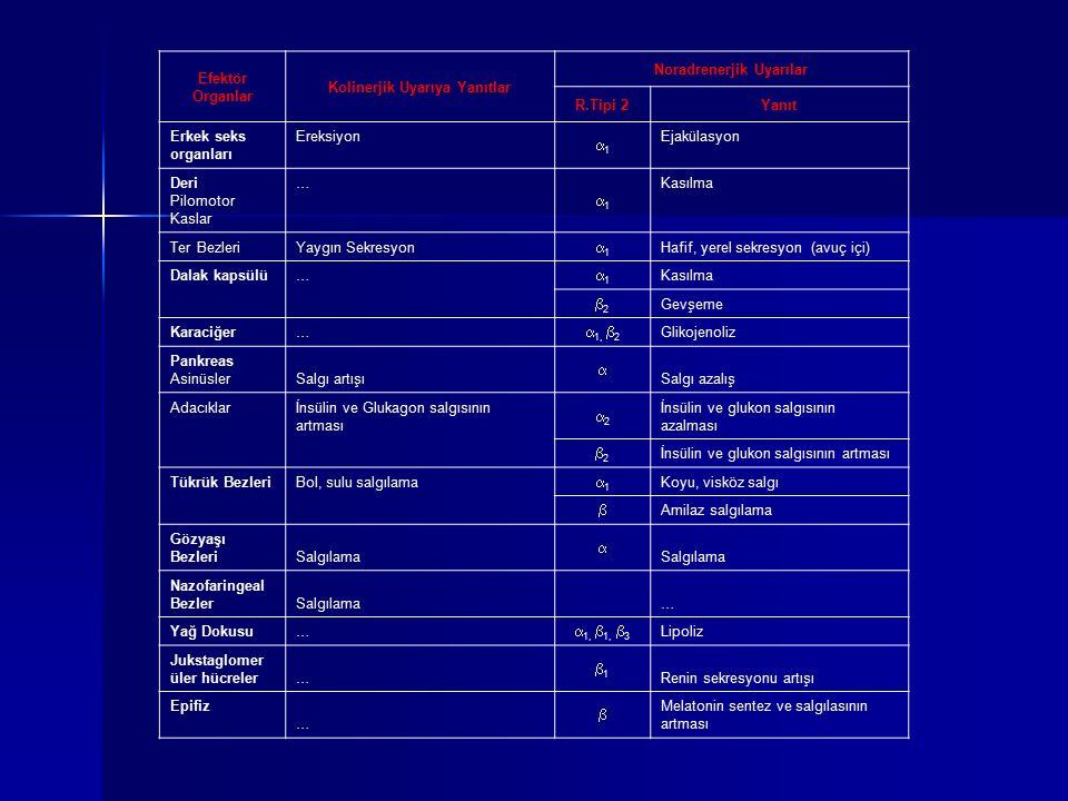 Efektör Organlar Kolinerjik Uyarıya Yanıtlar Noradrenerjik Uyarılar R.Tipi 2Yanıt Erkek seks organları Ereksiyon 11 Ejakülasyon Deri Pilomotor Kasla