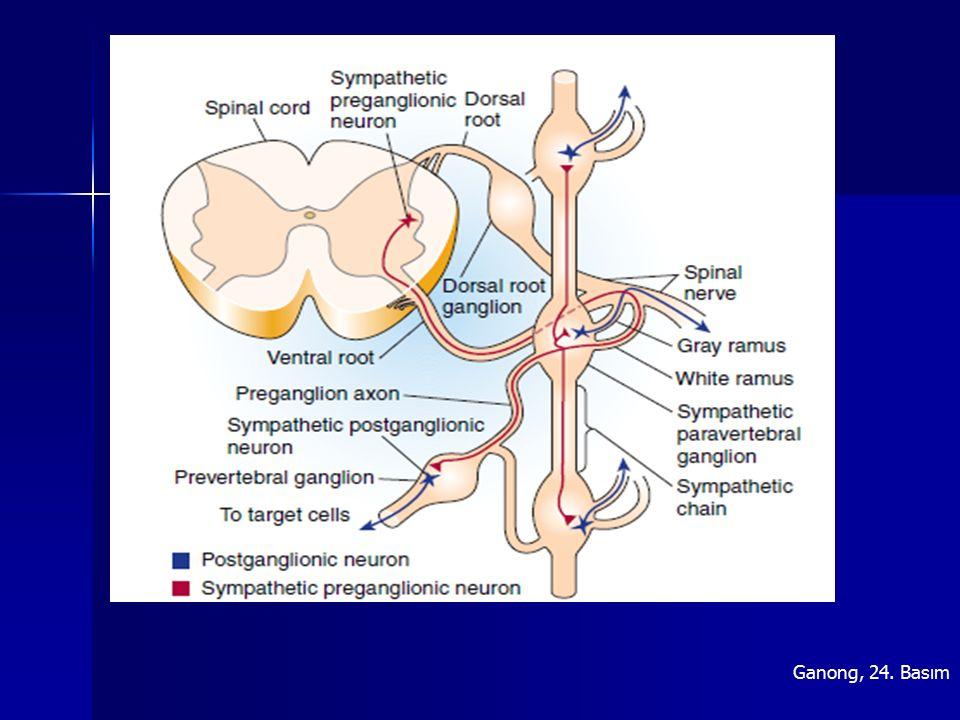 LokalizasyonAntagonistFonksiyon M1M1 Sinir dokusu bezler Pirenzepin Atropin Öğrenme, bellek, Sekresyon artışı M2M2 Kalp, sinir dokusu, düz kas Tripitramin Atropin Kalpte kasılma ve ileti azalışı Analjezi, düz kas kasılması Otoreseptör aktivitesi M3M3 Düz kas, bezler, endotel, Sinir dokusu Darifenasin Atropin Kasılma, sekresyon artışı NO sentezi M4M4 Oküler kas, sinir dokusuAtropinOtoreseptör Analjezi M5M5 SSSSerebral vazodilatasyon Parasempatik- muskarinik reseptörler, lokalizasyonları ve fonksiyonları