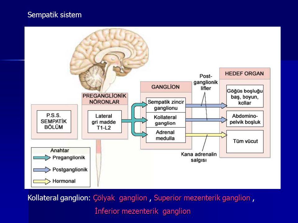 Sup servikal ganglion (C1-4) Orta servikal ganglion (C5-6) İnf servikal ganglion (C7-8) İnf servikal ganglion+ T1 -Stellat gangliyon Kan damarları düz kas, ter bezleri, piloerektör kas innervasyonu Kan damarları düz kas, ter bezleri, piloerektör kas innervasyonu Baş boyun,kalp ve akciğer Baş boyun,kalp ve akciğer Çölyak ganglion mide, karaciğer,dalak pankreas Sup mezenterik ganglion ince bağırsak, böbrek İnf mezenterik ganglion mesane, kolonun alt kısmı, genital organ