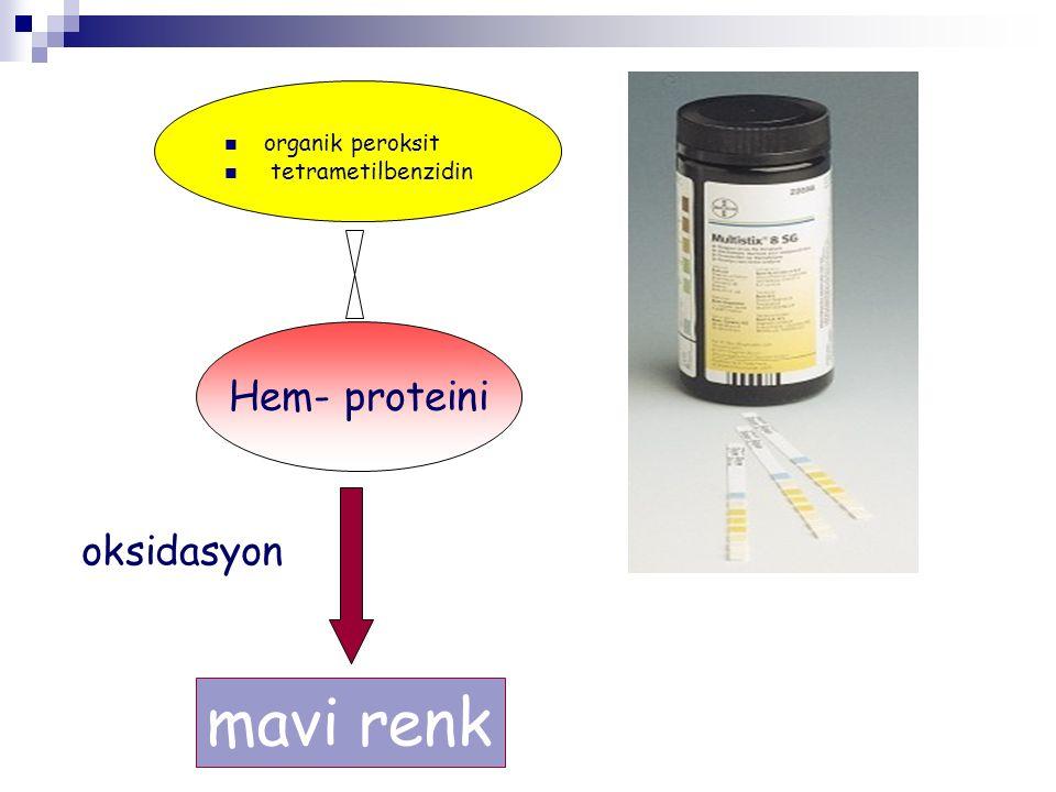 organik peroksit tetrametilbenzidin Hem- proteini oksidasyon mavi renk